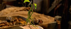 this-green-little-guy-who-follows-newt-around-is-a-bowtruckle